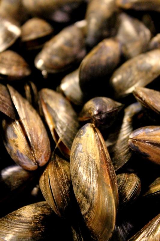 Mini-cocottes de moules de bouchot au safran et à l'estragon Cuisine de tous les jours