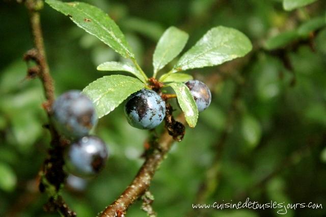 Gelée de prunelles sauvages