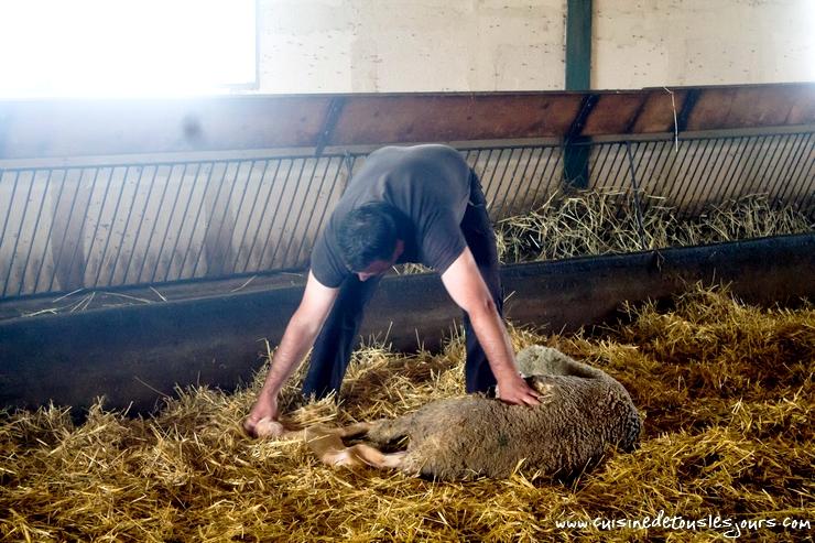 Nous avons même eu la chance d'assister à la naissance d'un agneau... - GAEC de Toulourenq à Sorbier – ©www.cuisinedetouslesjours.com