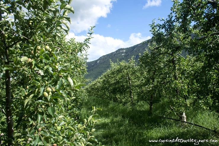 Verger de Lucie ILLY - productrice de pommes à Laragne-Monteglin – ©www.cuisinedetouslesjours.com