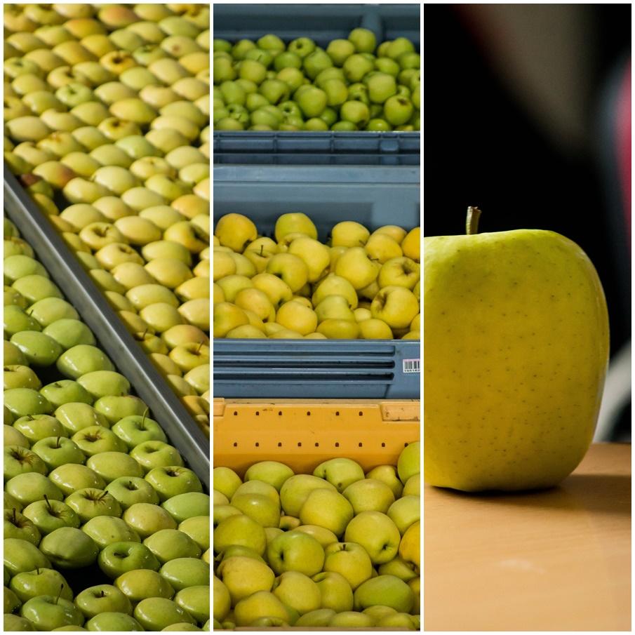 Station fruitière de calibrage et conditionnement SUPERALP, Sisteron – ©www.cuisinedetouslesjours.com