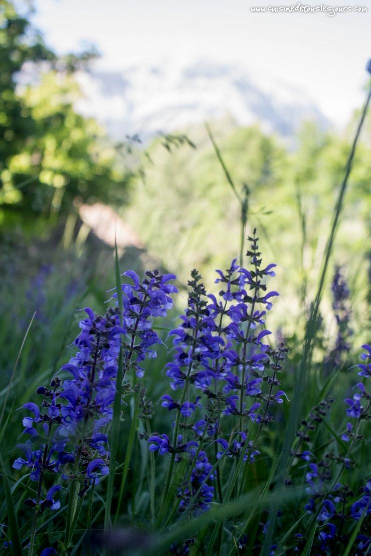 Hautes Alpes – ©www.cuisinedetouslesjours.com