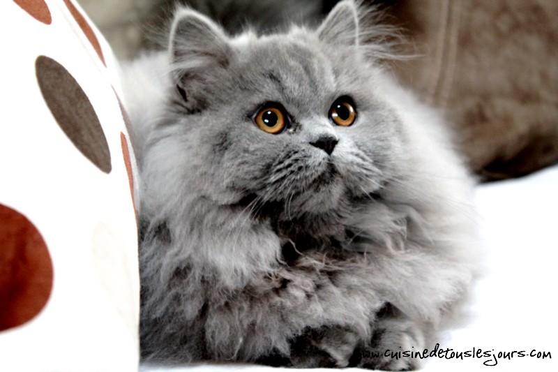 Langues de chat au chocolat cuisine de tous les jours - Langue de chat cuisine ...